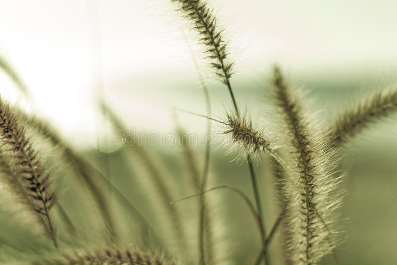 Strandgras stock afbeeldingen