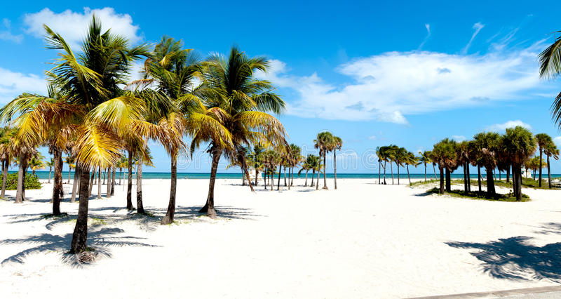 strandgrupppalmträd arkivbilder