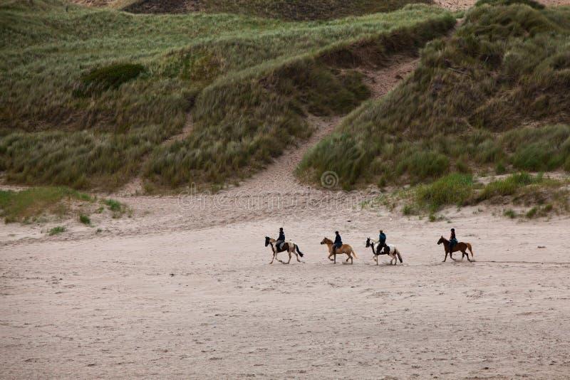 strandhästar royaltyfri fotografi