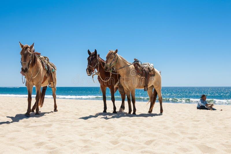 strandhästar tre royaltyfria foton