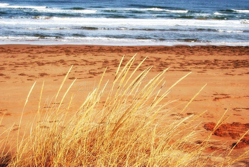 Strandhafer entlang dem Prinzen Edward Island Shoreline lizenzfreie stockfotos