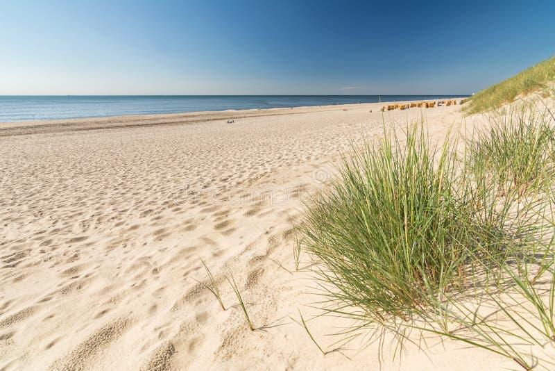 Strandhafer- und Sandstrand auf ruhiger Ozeanküste lizenzfreies stockfoto