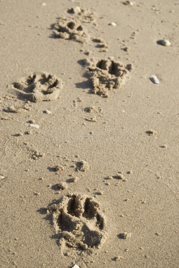 strandhunden går arkivbilder