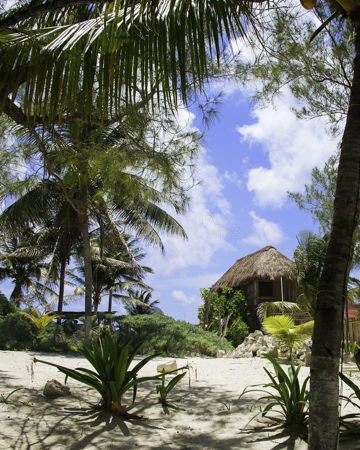 Strandhut en palmen royalty-vrije stock foto's
