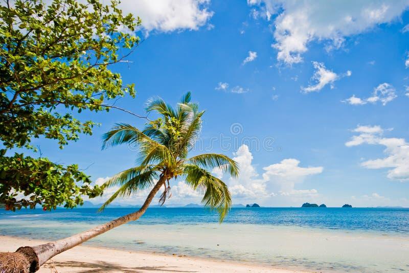 strandkokosnöt royaltyfri foto