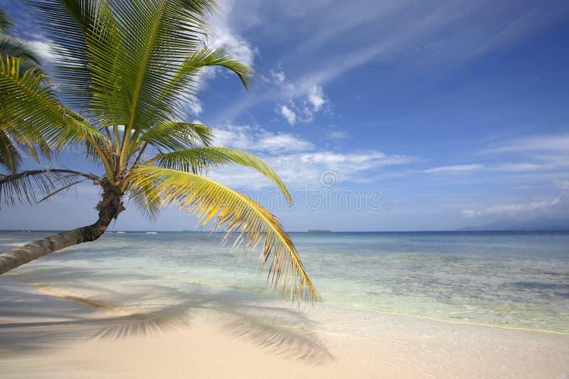 Strandkokosnöten Gömma I Handflatan Paradis Royaltyfri Fotografi