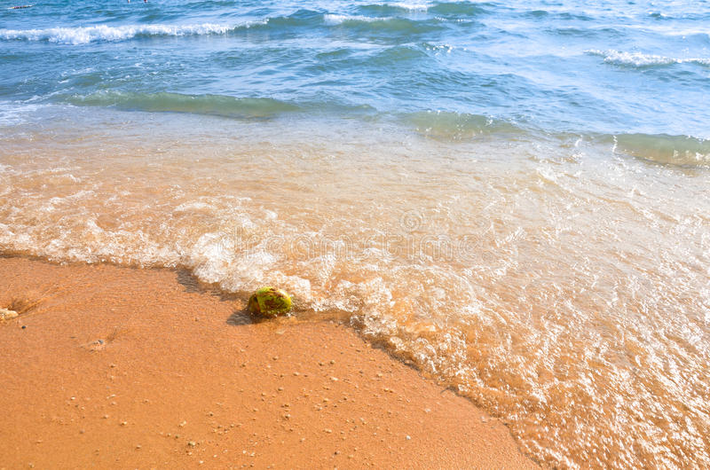 Strandkokosnoot stock afbeelding