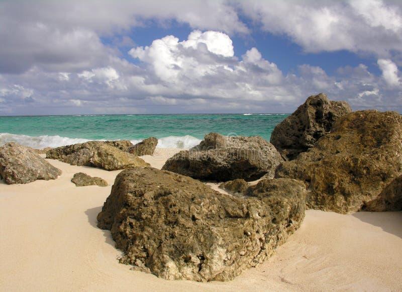 strandkorall arkivbild