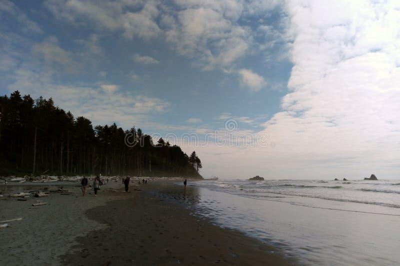 Strandkustlijn in het Olympische Nationale Park, het Olympische Schiereiland dichtbij Seattle stock afbeeldingen