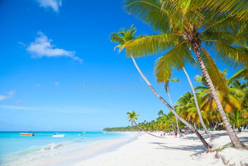 Strandlandschap met kokospalmen stock afbeeldingen
