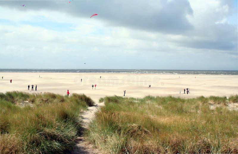 strandliv i Texel royaltyfri bild