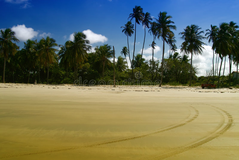strandmaracaju natal s arkivbilder
