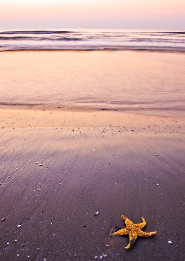 strandmorgon royaltyfri fotografi