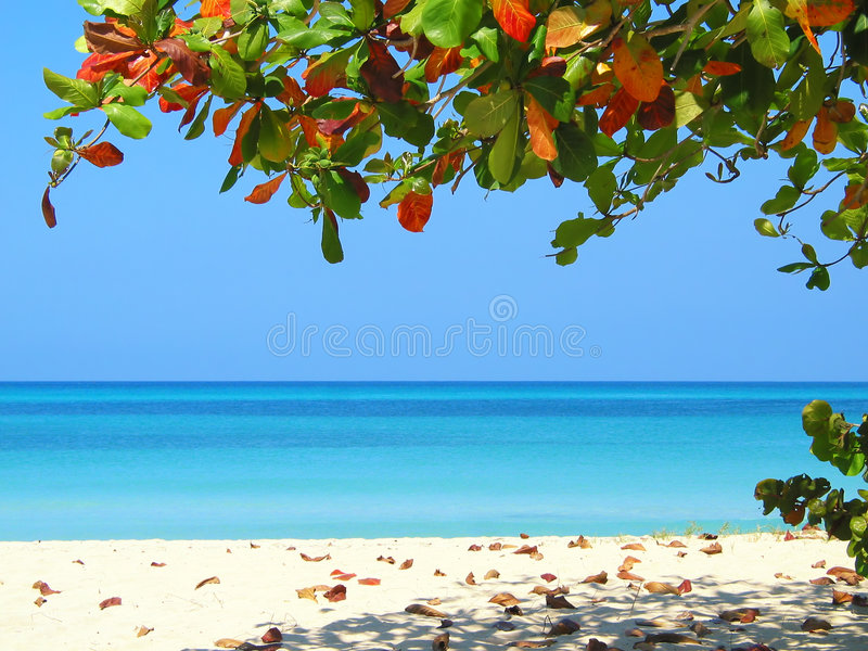 strandnegrils royaltyfri fotografi