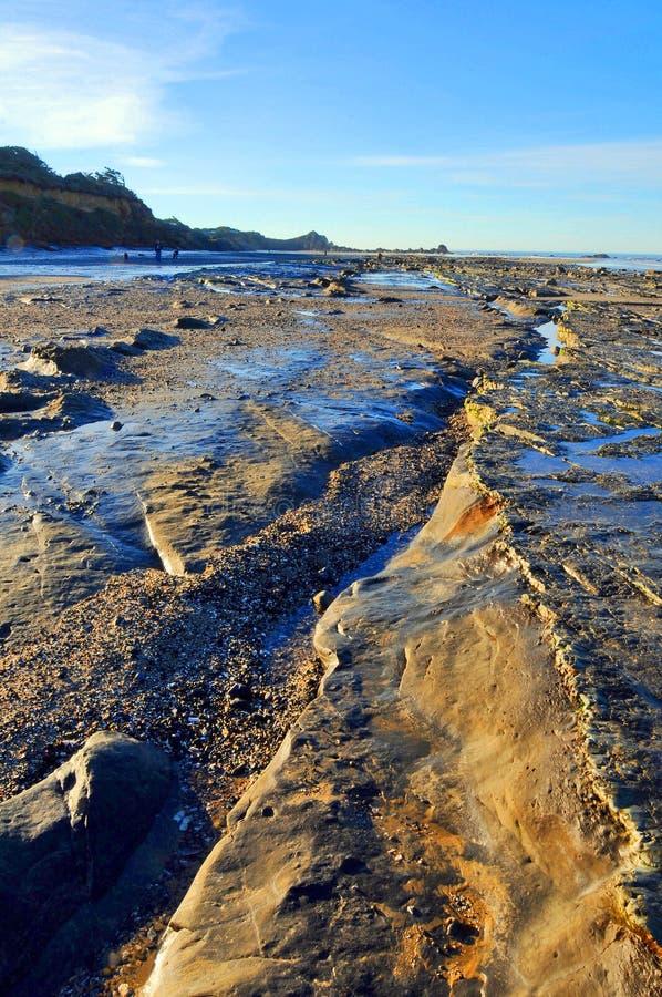 strandotta arkivfoto