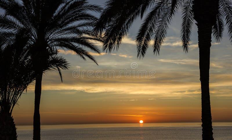 Strandpalm, zonsondergangmening De scène van de de zomeraard stock fotografie