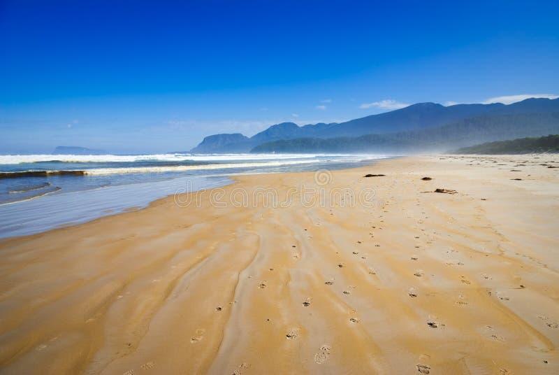 strandprion fotografering för bildbyråer