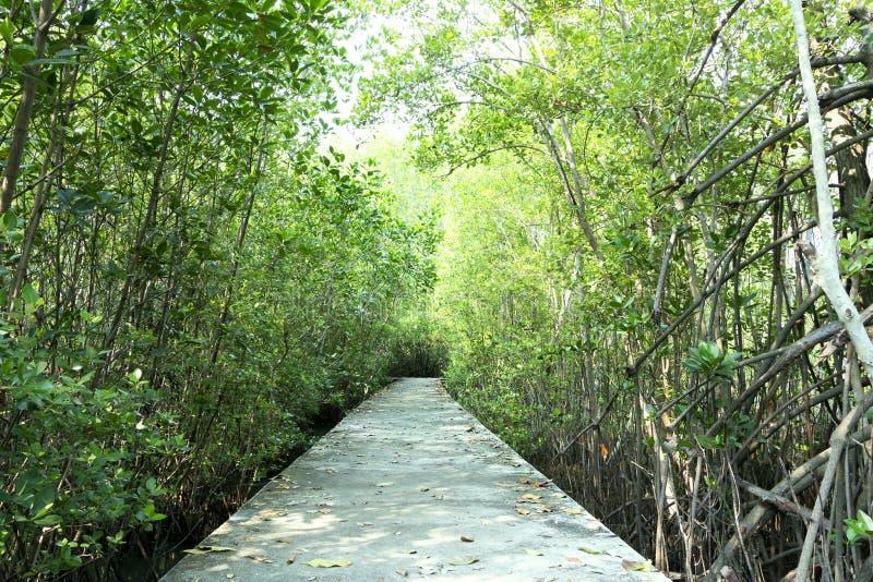 Strandpromenad till och med ett mangrovefält arkivbild