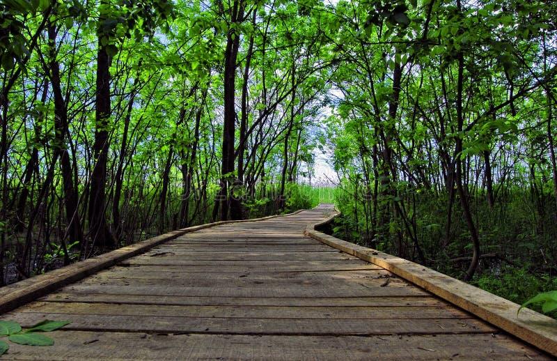 Strandpromenad till och med skogreserv arkivfoto
