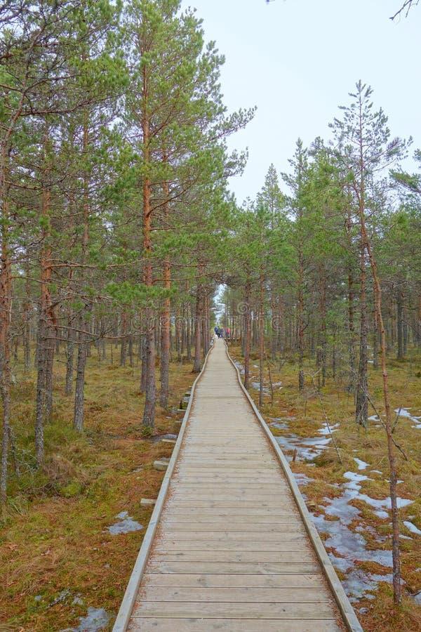 Strandpromenadbana till och med våtmarkområde i tidig vår Strandpromenad i slinga för Viru myrnatur estonia Myrstrandpromenaden ä arkivbild