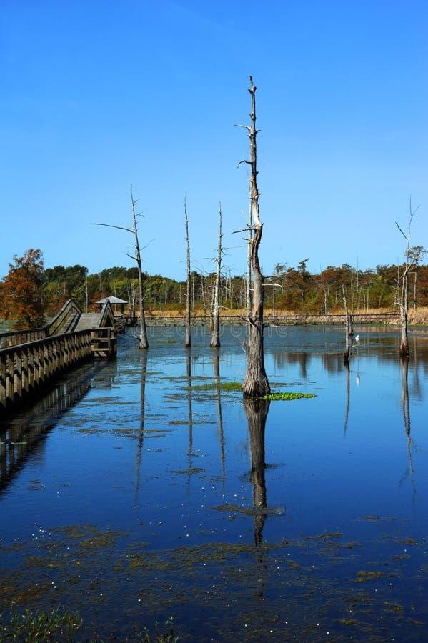 Strandpromenaden sträcker in i den svarta flodarm sjön royaltyfri fotografi