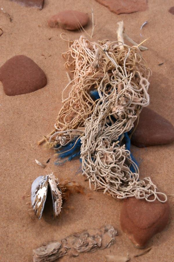 strandrön royaltyfria foton