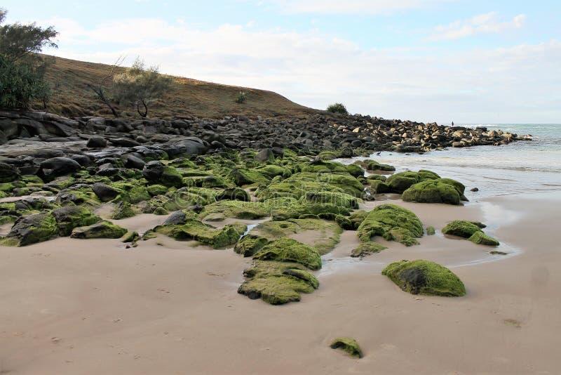 Strandrotsen met mos stock fotografie