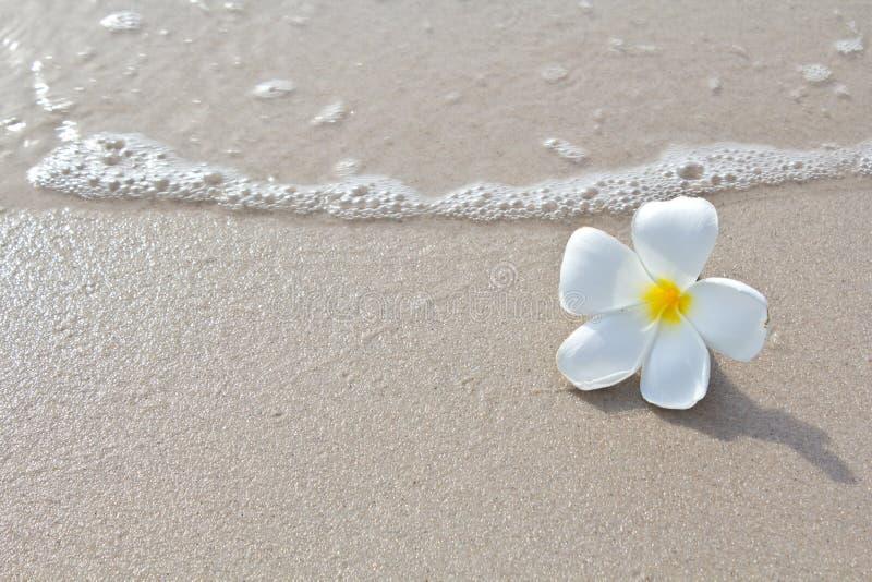 strandsamlingen blommar naturwhite royaltyfri fotografi