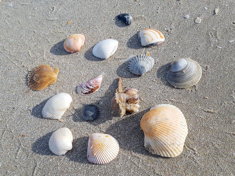 Strandsand med spridda havsskal royaltyfri foto