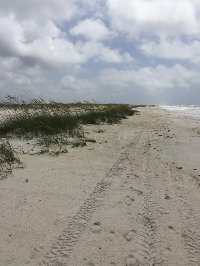 Strandschönheit stockbilder