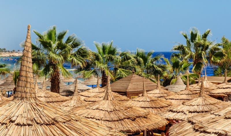 Strandschirme und Palmen auf sandigem Strand lizenzfreie stockbilder