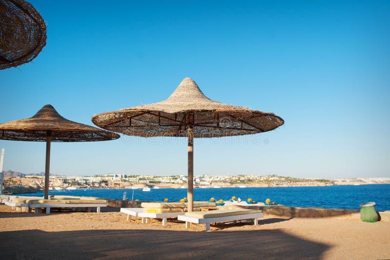 Strandschirme und Palmen auf sandigem Strand lizenzfreies stockbild