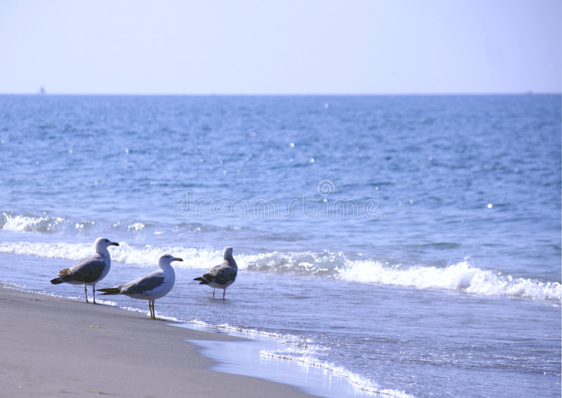 strandseagulls royaltyfri bild