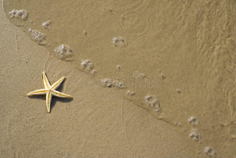 strandsjöstjärna fotografering för bildbyråer