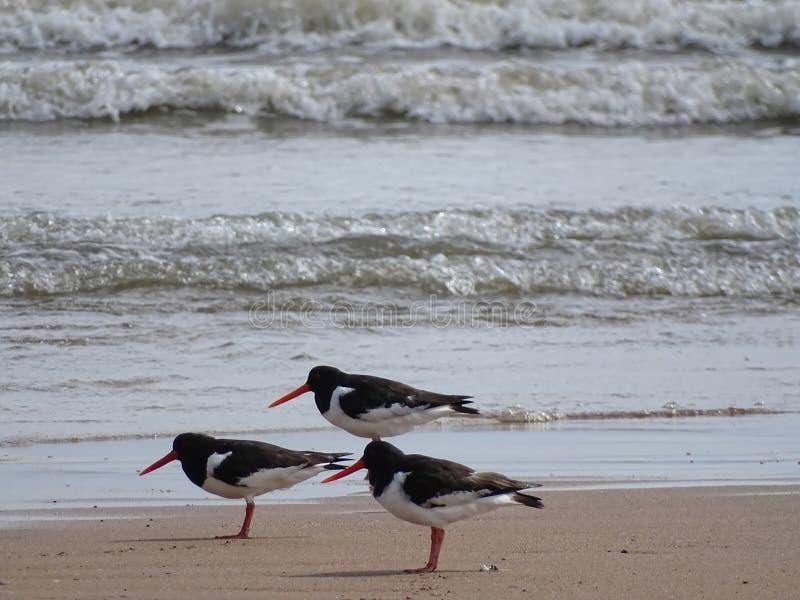 strandskata på stranden Newburgh arkivfoton