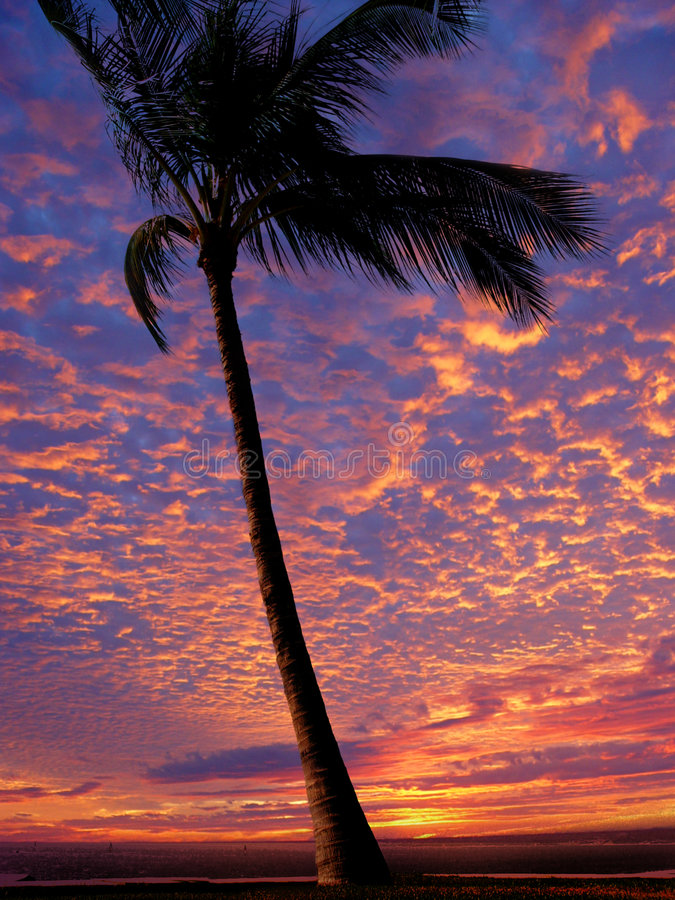 Download Strandsolnedgång arkivfoto. Bild av karibiskt, vildmark - 46096