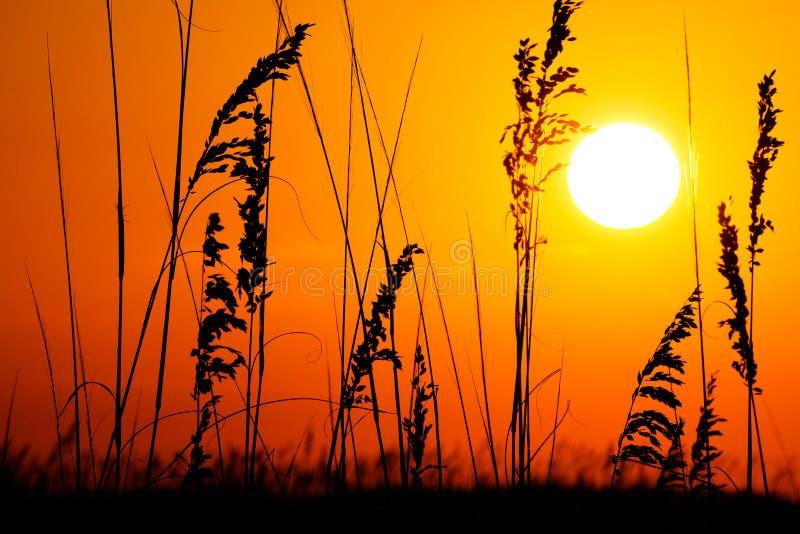 Strandsoluppgång/solnedgång royaltyfri bild