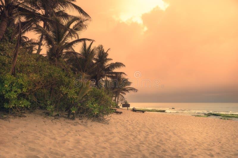 Strandsonnenuntergangreiseferien-Lebensstillandschaft mit Sandküstenlinienwellen der Palmen breiten mit szenischem orange Sonnenu stockfotos