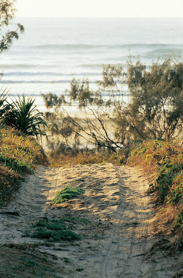 strandspår royaltyfria bilder