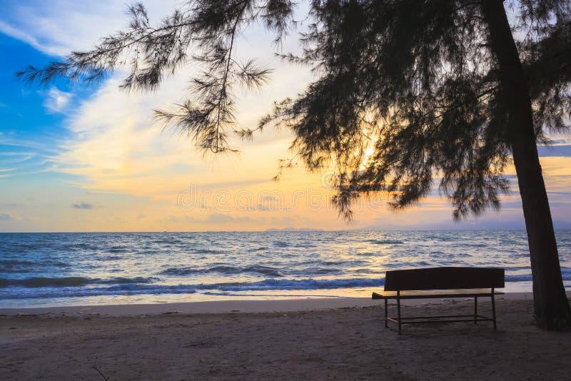 Strandstolar under träd på solnedgången arkivfoton