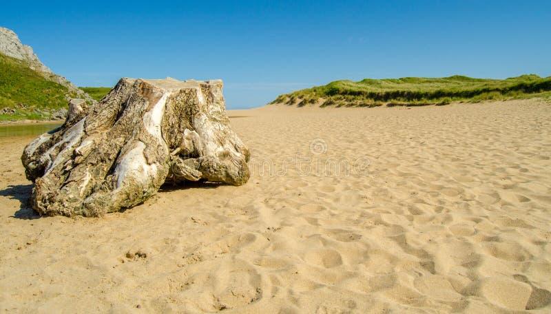 Strandstumpf lizenzfreie stockfotos