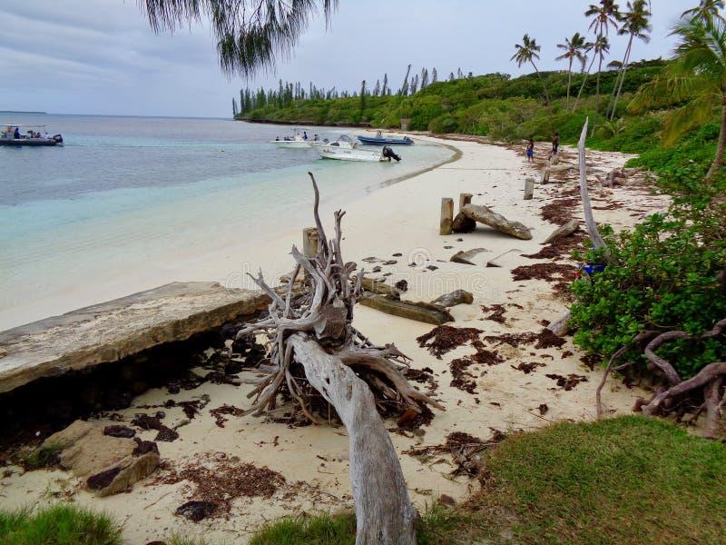 Strandszene auf Insel von Kiefern lizenzfreies stockfoto