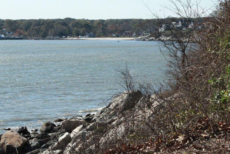 Strandtidseagulls som kryssar omkring från över royaltyfri foto