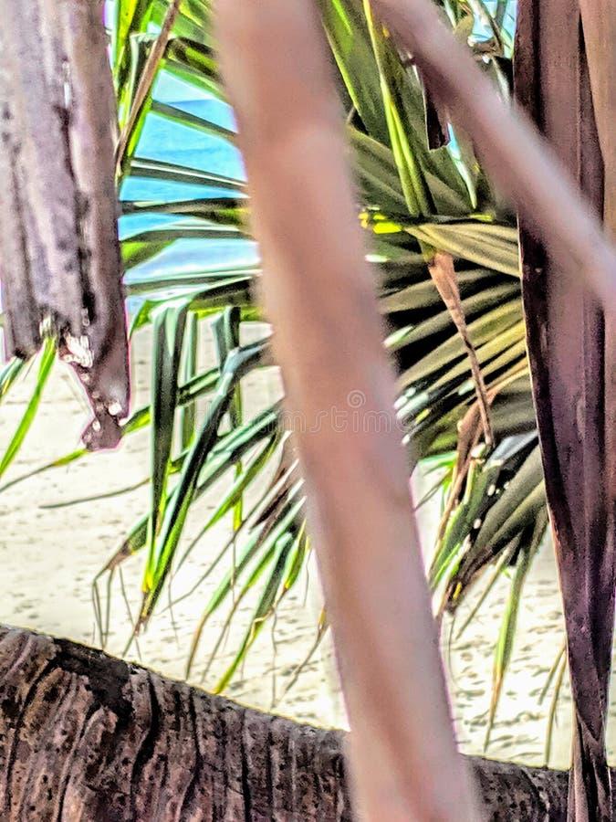 Strandträdet spricker ut förälskelseskönhet arkivbilder