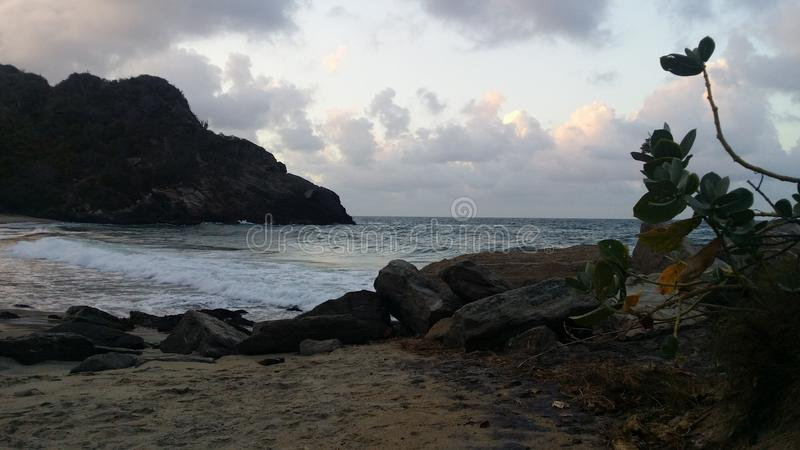 Strandväxt arkivfoton