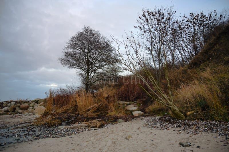 Strandvegetatie langs de steile kust van de Oostzee met bomen, struiken en helmgras in de herfst en de winterkleuren, exemplaar royalty-vrije stock foto