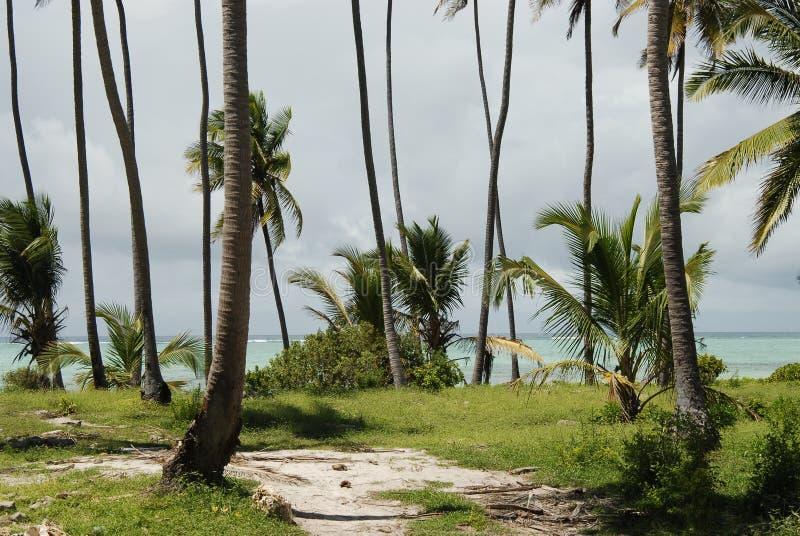 strandvegetation zanzibar royaltyfri foto