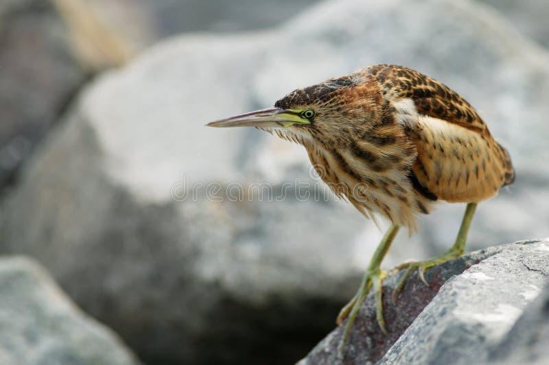 Strange Bird Royalty Free Stock Image