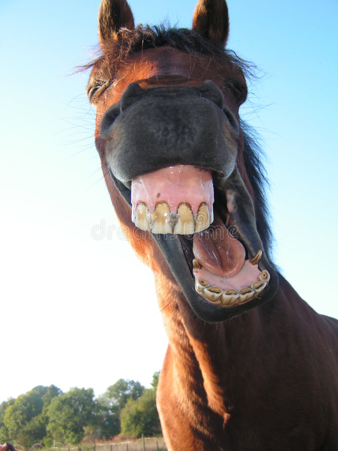Strange facial expression of a horse stock images