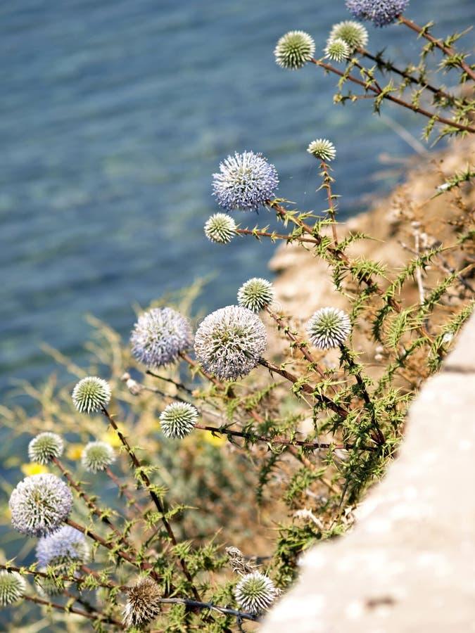 Strange Flowers Along the Sea stock photography